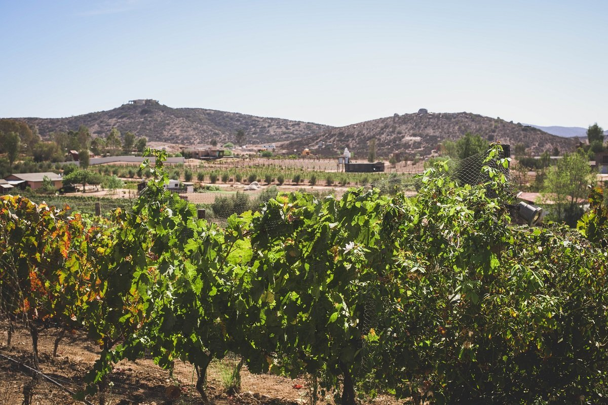 Wine Country at Valle de Guadalupe, Baja California, Mexico