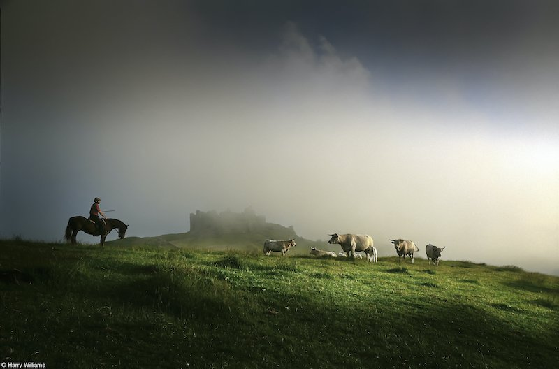 Food in the Field: Farmer with his Longhorn Cattle, Harry Williams, United Kingdom